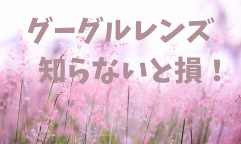 グーグルレンズ便利すぎ!【写真撮るだけで知りたい花の名前を教えてくれる神アプリ】