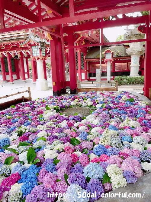 福岡県【あじさい花手水をしている神社はどこ?】花手水舎スポットまとめ