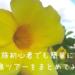【宮古島女ひとり旅】格安ツアーを探してみる♪【一覧付き】